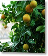 Orange Tree Metal Print by Lorraine Devon Wilke