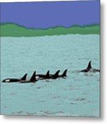 Orca Pod Metal Print