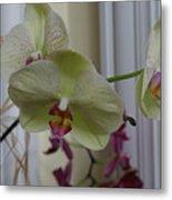 Orchid - 103 Metal Print