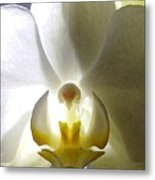 Orchid - The Wallflower Metal Print