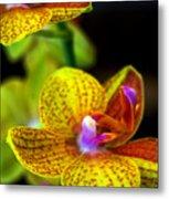 Orchid-0022 Metal Print
