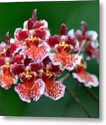 Orchid 31 Metal Print
