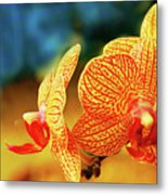 Orchid 9 Metal Print by Chaza Abou El Khair