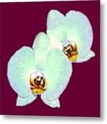 Orchid Art 5 Purple Zurich 2000 Jgibney The Museum Zazzle Gifts Metal Print