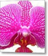 Orchid I Pretty Metal Print