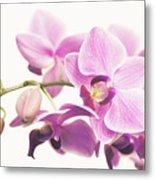 orchid II Metal Print