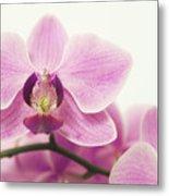 orchid III Metal Print
