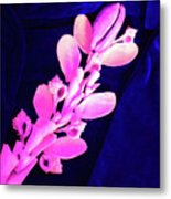 Orchidaceae Shell Metal Print by Arlin Jules