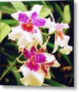 Orchids 1 Metal Print