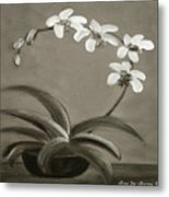 Orchids In Black And White Metal Print