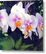 Orchids Of Hawaii Metal Print
