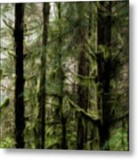 Oregon Old Growth Coastal Forest Metal Print