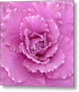 Ornamental Cabbage With Raindrops - Square Metal Print