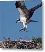 Osprey Returning Home Metal Print