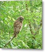 Owl II Metal Print