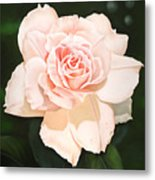 Pale Pink Rose Metal Print