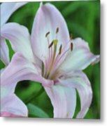 Pale Pink Stargazer Lillies II 2010 Metal Print