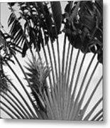 Palm Frons Metal Print