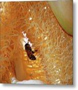 Palm Pollination Metal Print