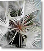 Palm Wonderful Metal Print
