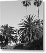 Palms2 Metal Print