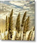 Pampas Grass Metal Print