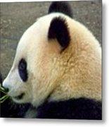 Panda Snack Metal Print