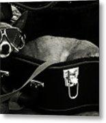 Panhandling Dog Metal Print by Julie Niemela