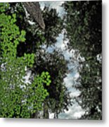 Paradise To Lovers Of Big Trees - Olympic National Park Wa Metal Print