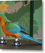Parrot On Skates Metal Print by Ruth Hallam