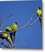 Parrot Squabble Metal Print