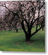 Paso Robles Orchard Metal Print