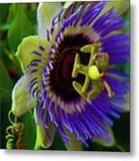 Passion-fruit Flower Metal Print