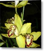 Pastel Yellow And Wine Orchids Metal Print