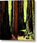 Path Through The Forest Edge . 7d5432 Metal Print