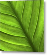 Peace Lily Leaf Metal Print
