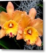 Peachy Couple Metal Print