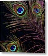 Peacock 5 Metal Print