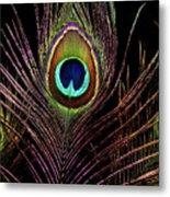 Peacock 6 Metal Print