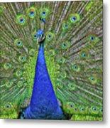 Peacock In A Oak Glen Autumn 3 Metal Print