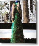 Peacock In The Snow Metal Print