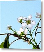 Pear Tree Blossoms 4 Metal Print