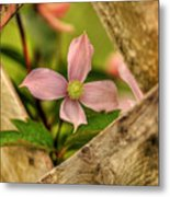 Peeking Throuigh Metal Print