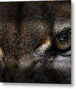 Peering Eyes Metal Print