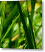 Pei Grass - Top Metal Print
