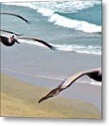 Pelican Fly-by Metal Print