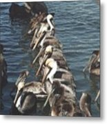 Pelican Line Metal Print