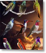 Perched Hummingbird Collage Metal Print