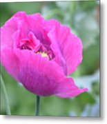 Perfect Poppy Metal Print