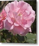 Perfect Rose Metal Print